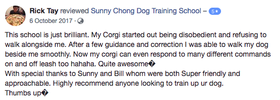 dog basic obedience testimonial